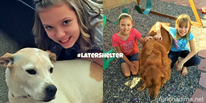#LaterShelter donate a bowl of dog food for a dog in need