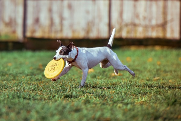 Dogs love playing with a frisbee