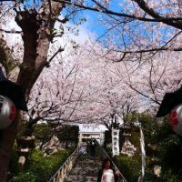 japan_flower_20141210_01