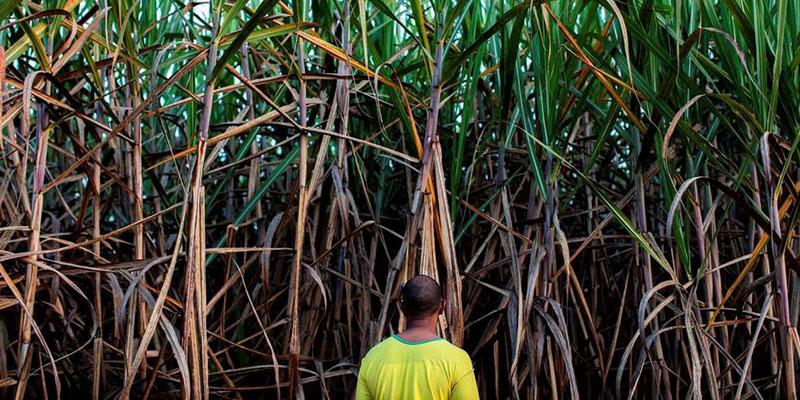 Intoxicações Por Agrotóxicos Em Zonas Rurais