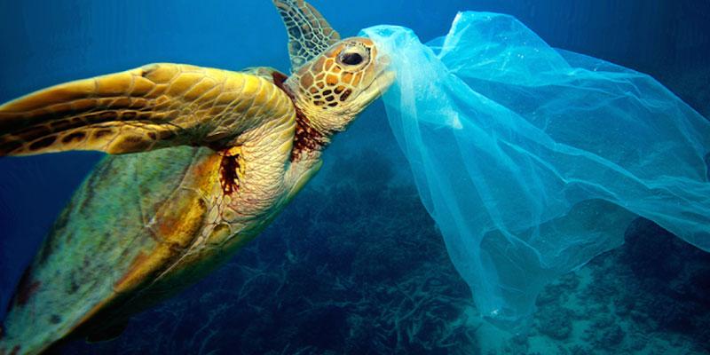 Alemanha Prepara Lei Para Banir Sacolas Plásticas No Comércio