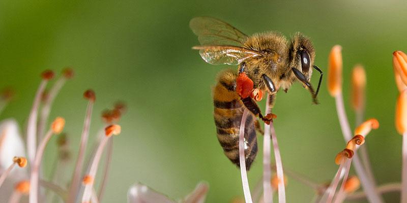 Segredos Das Abelhas E Sua Sociedade Modelo