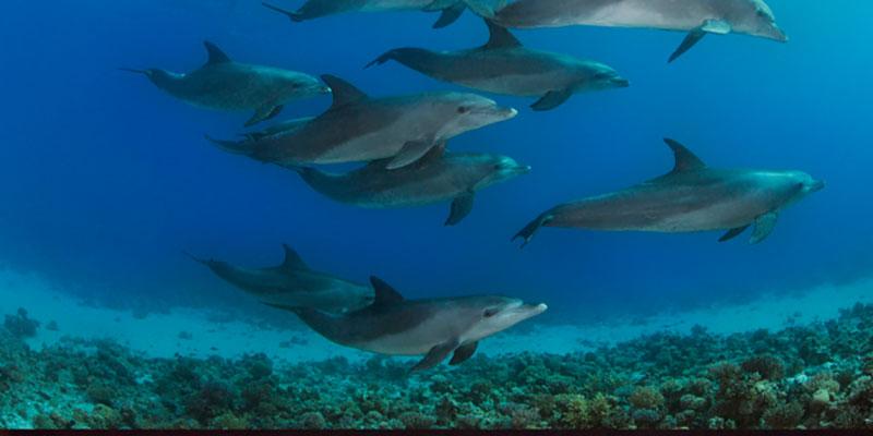 Resíduos De Tintas E De Cosméticos São Encontrados Em Golfinhos