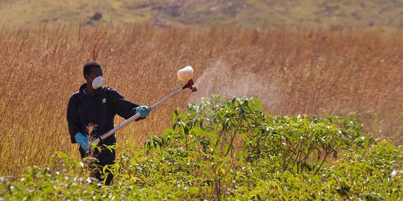 Um Trabalhador Morre A Cada 30 Segundos No Mundo Por Exposição A Substâncias Tóxicas, Diz ONU