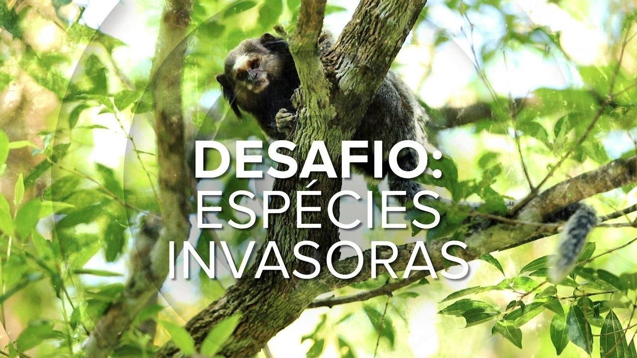 20% Das 'espécies Exóticas Invasoras' No Brasil Estão Em SC E Causam Prejuízos Para Natureza E Economia