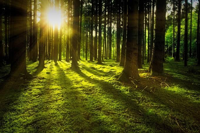 Reflorestamento Pode Retirar 25% Do Gás Carbônico Do Ar, Diz Pesquisa