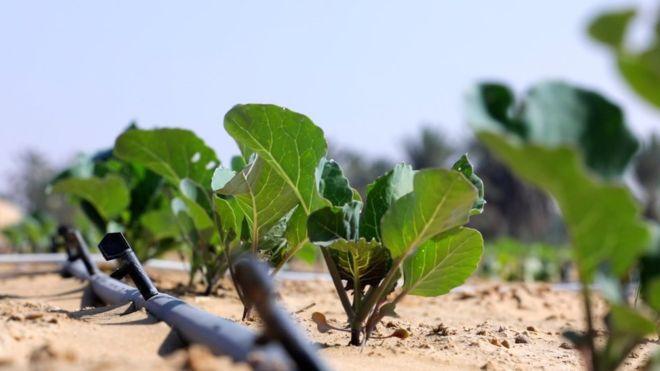 A Técnica Inovadora Capaz De Transformar Areia Do Deserto Em Terra Fértil