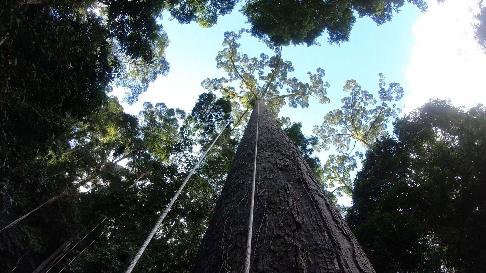 Alemanha Quer Acordo UE-Mercosul, Mas Precisa Ver Queda No Desmatamento Da Amazônia