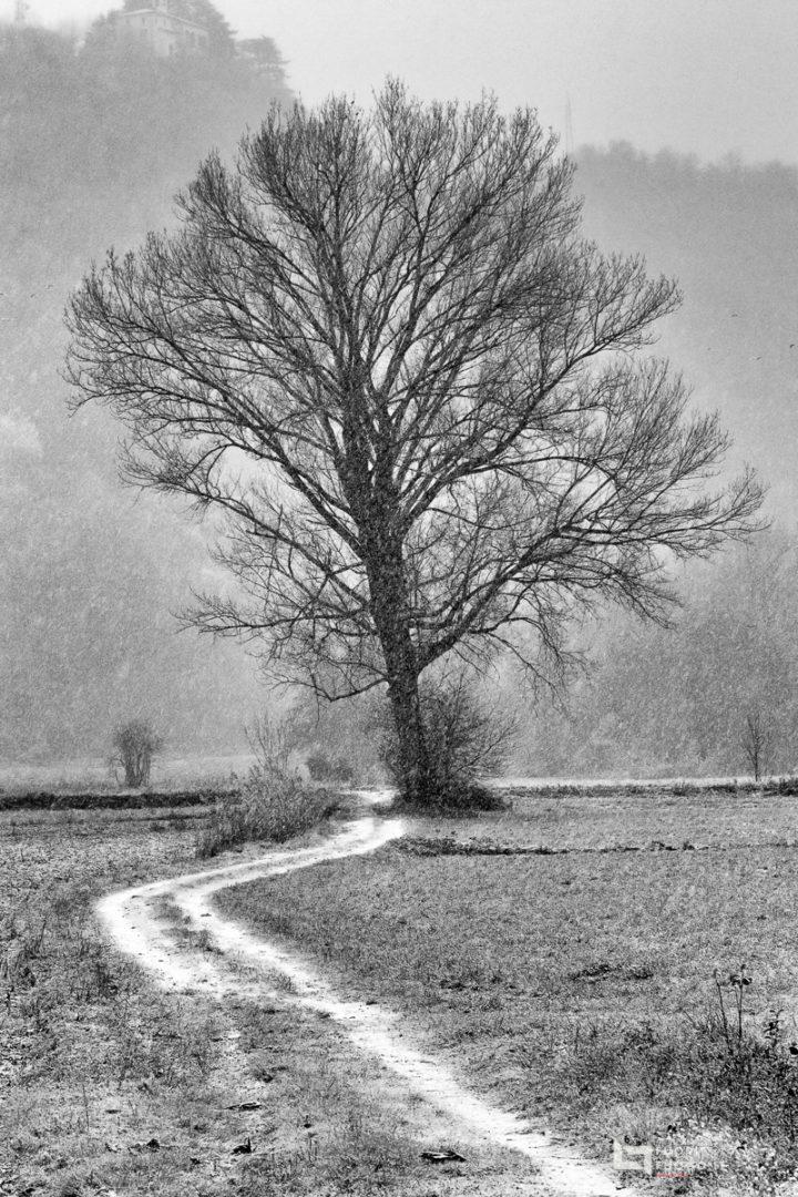 Sentieri di neve © FuoriFuoco.it
