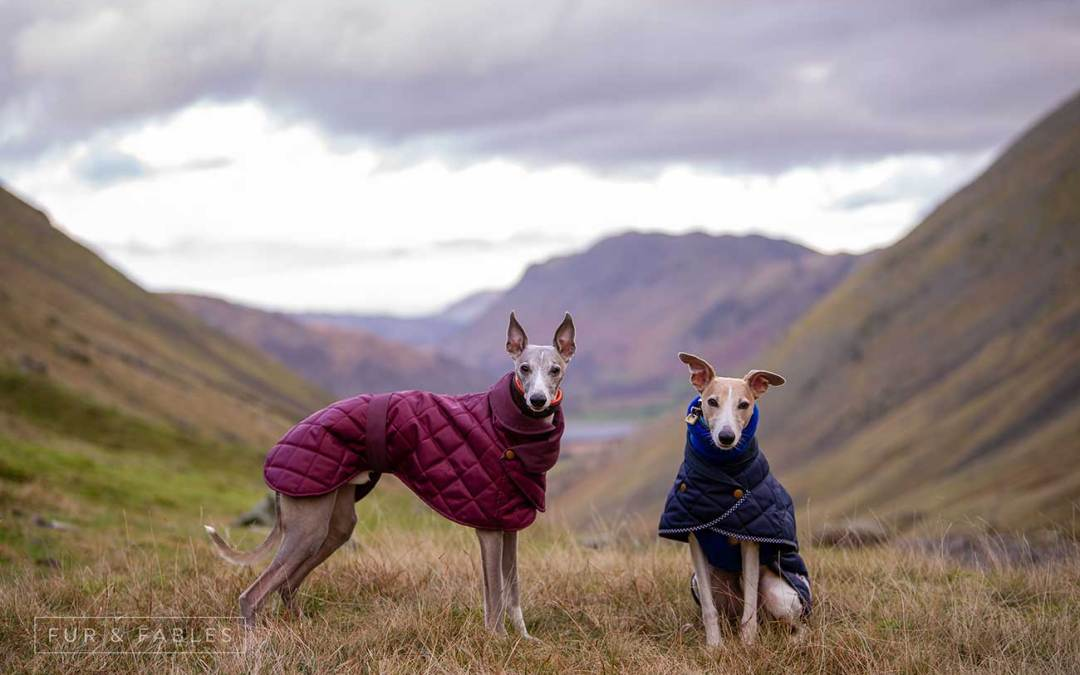 The Lake District in winter with your dog