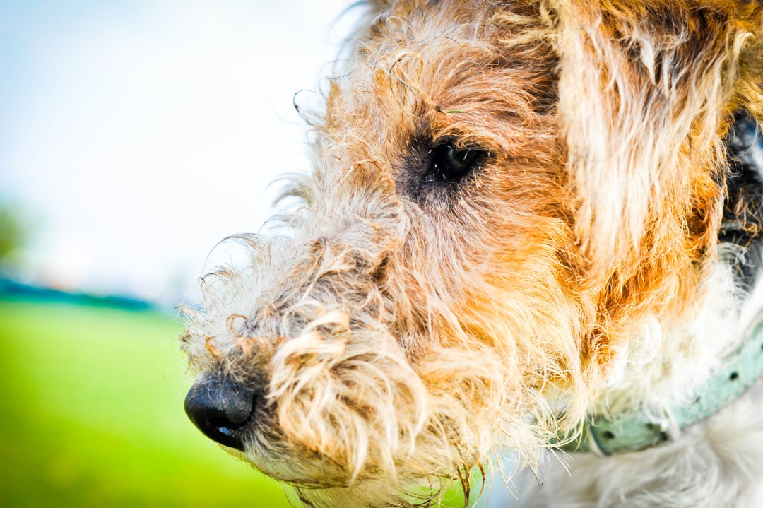 Bad image of of a dog which is over saturated with a wonky horizon line