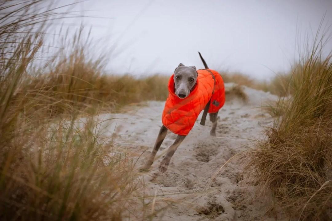 high visibility dog coat
