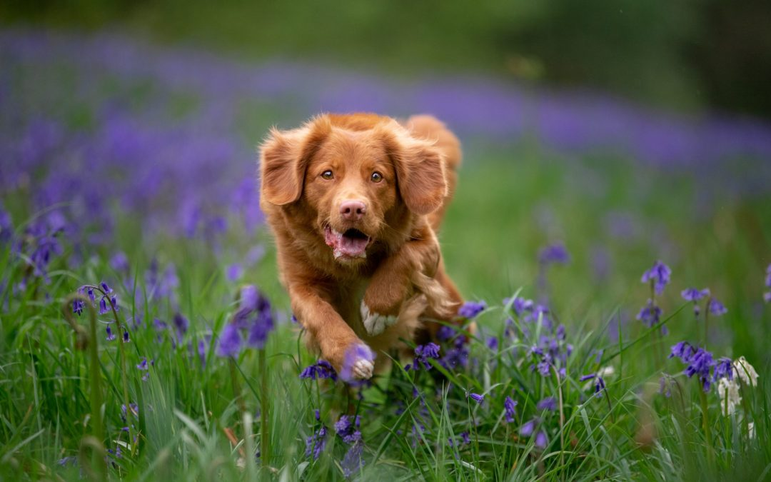 Action in the Bluebells