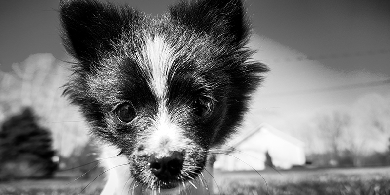 bisogni del cane banner