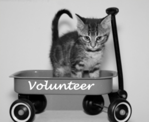 Animal_Shelter_volunteer_cat_in_wagon
