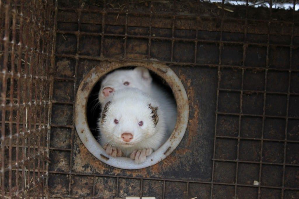 animal rights photography for fur ile ilgili görsel sonucu