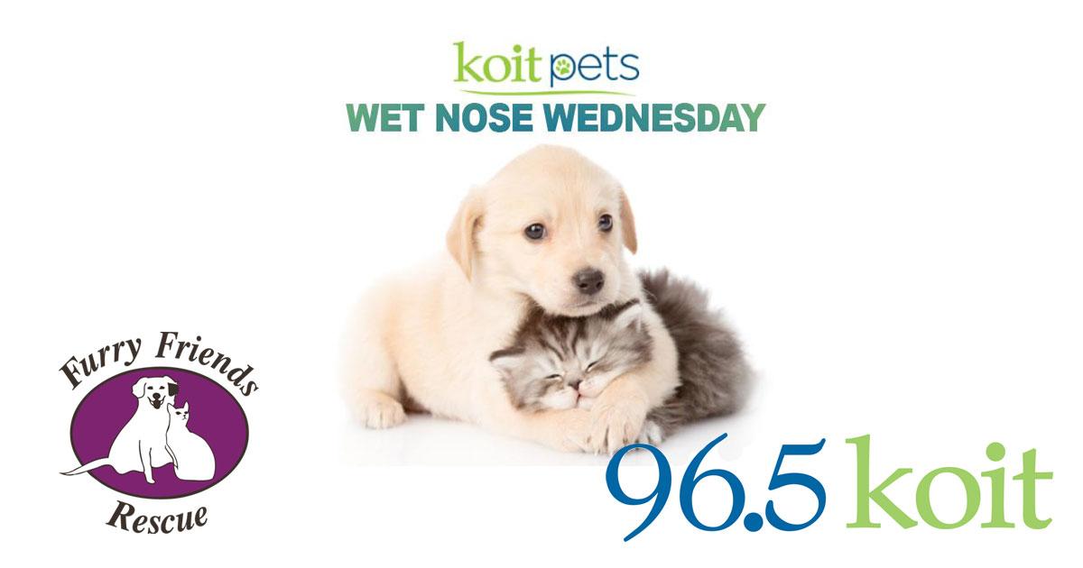 96.5 KOIT San Francisco Wet Nose Wednesday