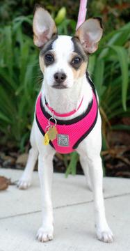adoptable - needs foster home!