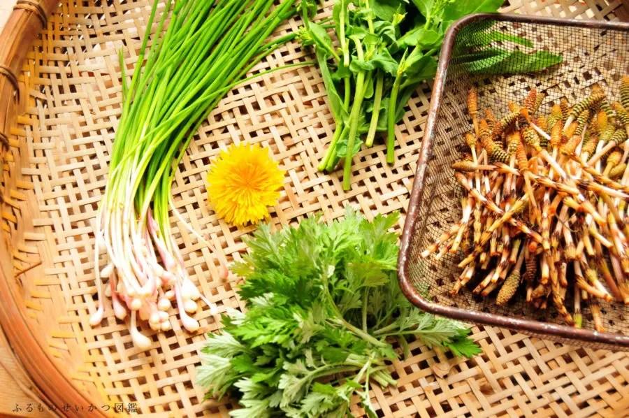 【食べられる野草】春の雑草を食べる田舎生活