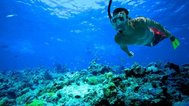 Image result for snorkeling