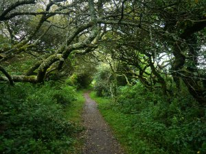 Path to Madron Well - Holy Well or Healing Well