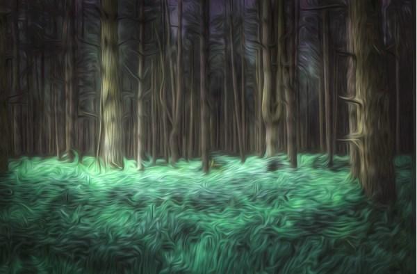 wild wallpaper forest mural