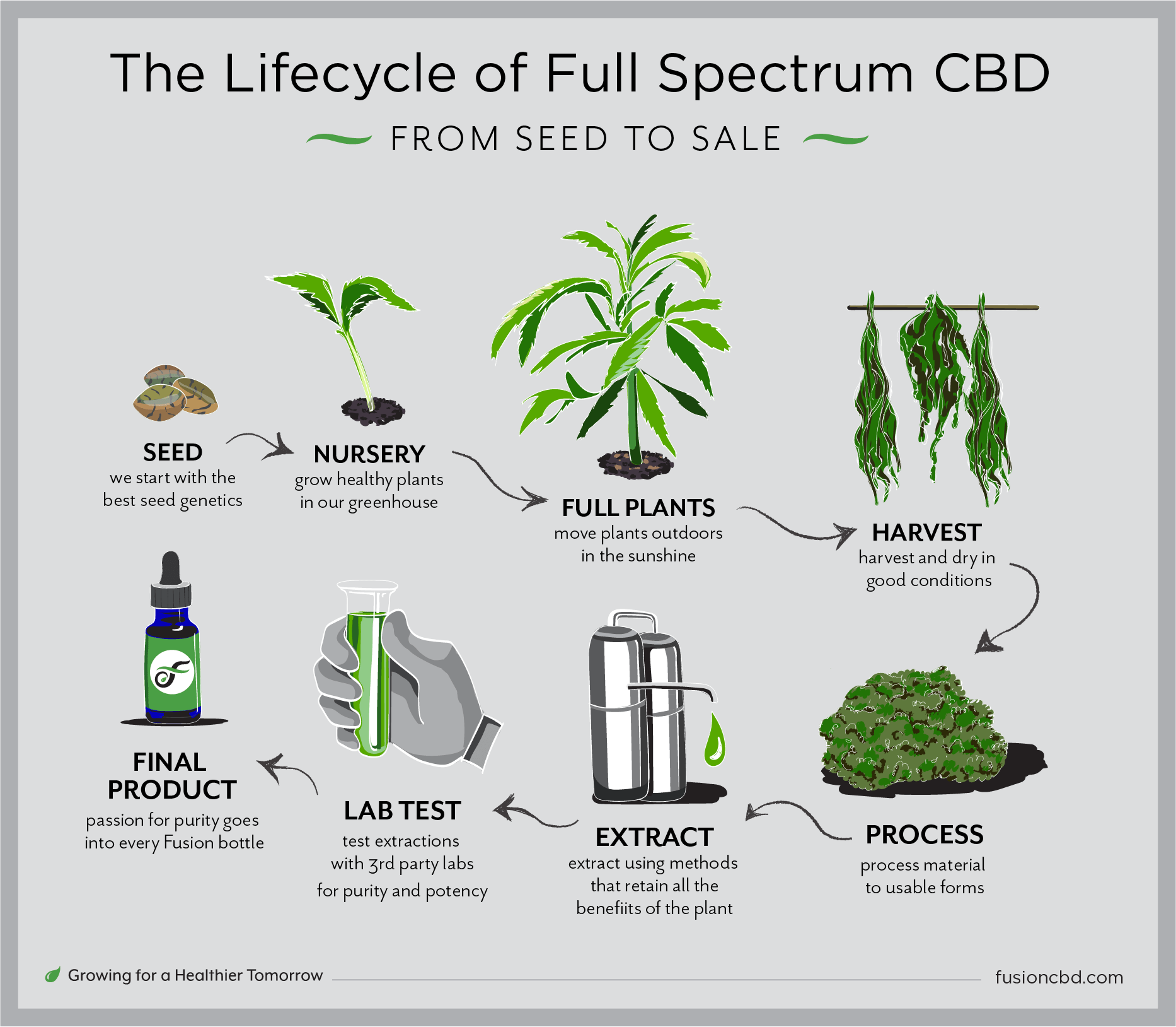 the lifecycle of fusion CBD hemp from seed to sale