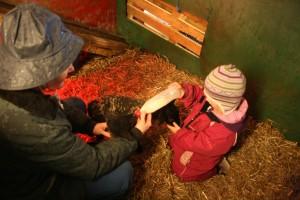 Maren Emilie gir melk til kopplam