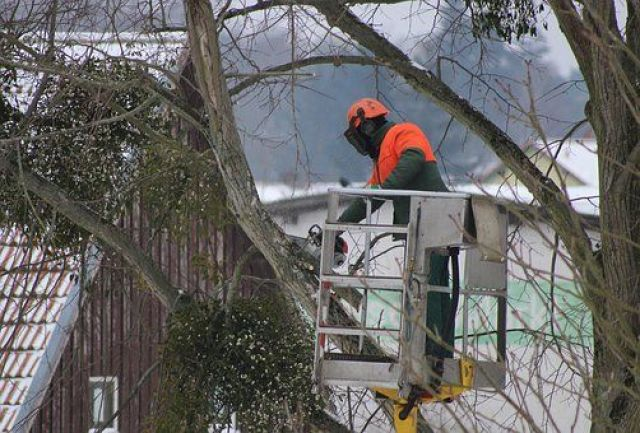 Promoting Health And Appearance Is The Primary Objective Of Tree Pruning And Cutting