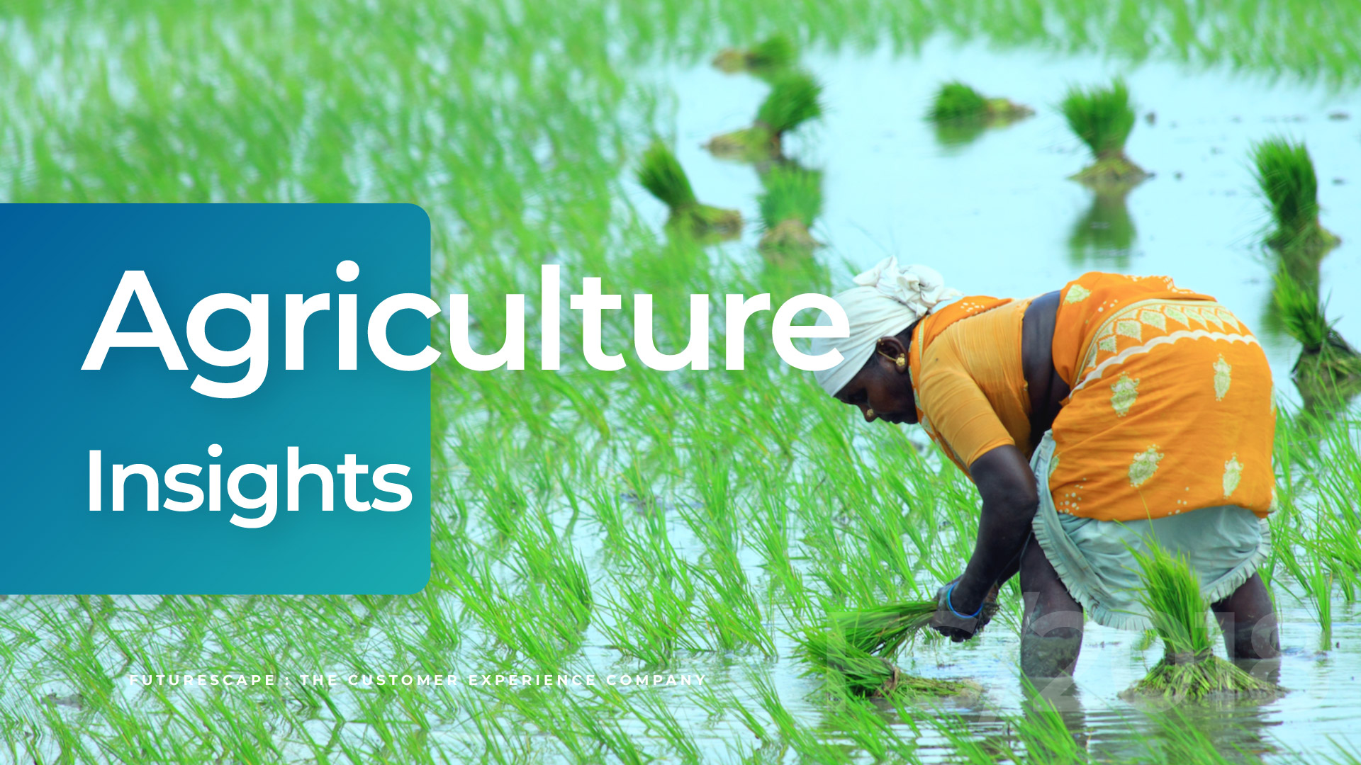 cover_agriculture-insights