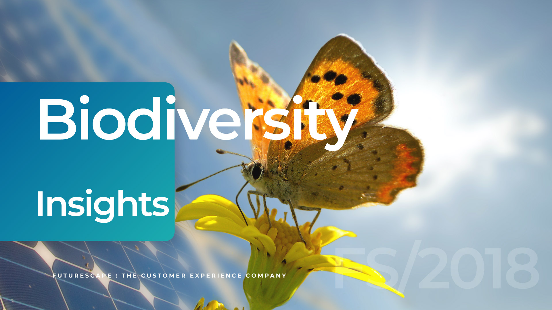 cover_biodiversity-insights
