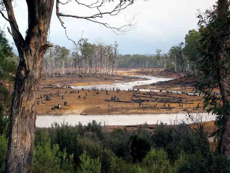 nigeria rainforest cross river state deforestation logging africa future