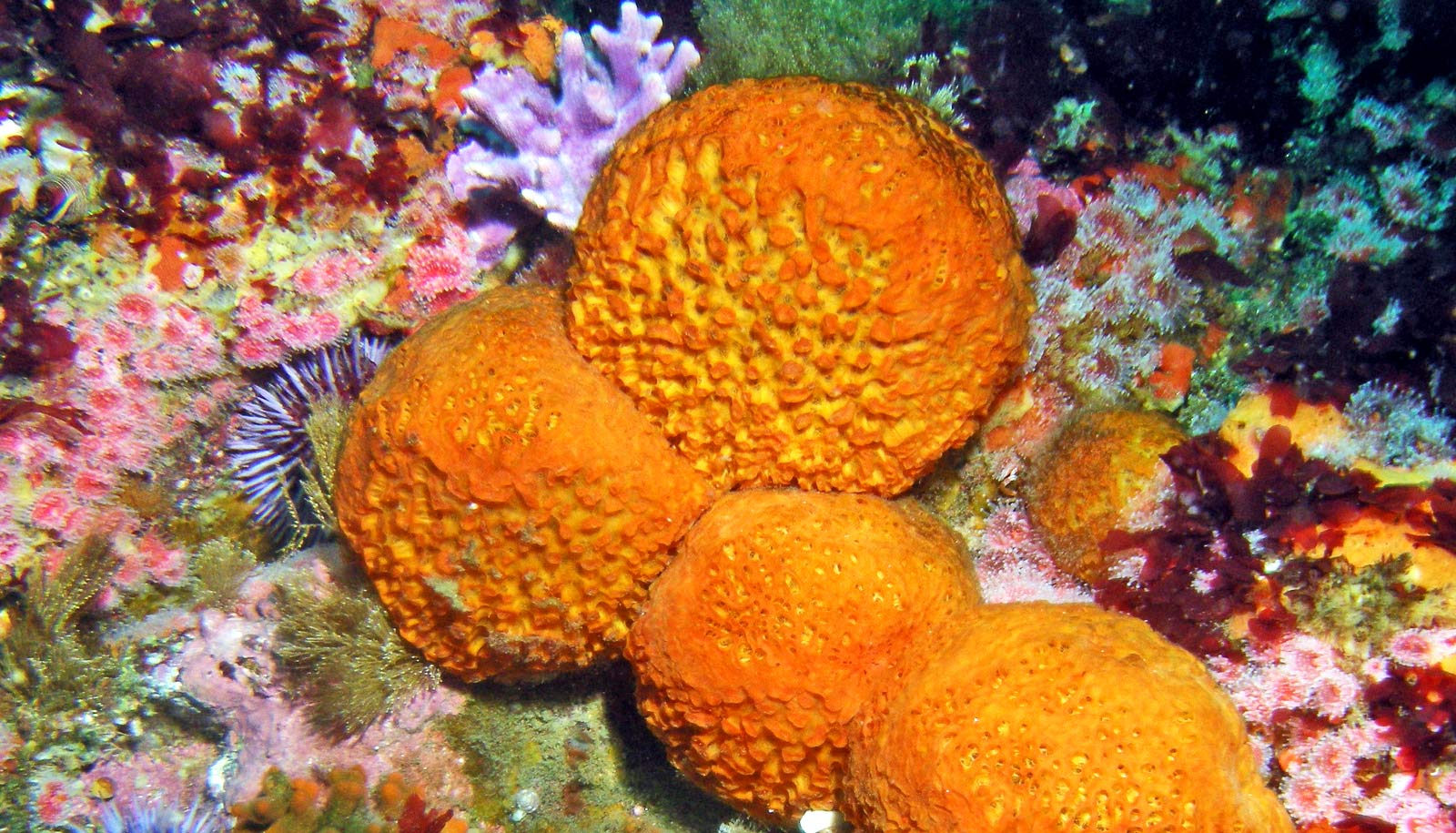 Tiny Rods In Sea Sponges Are Awesome At Not Buckling