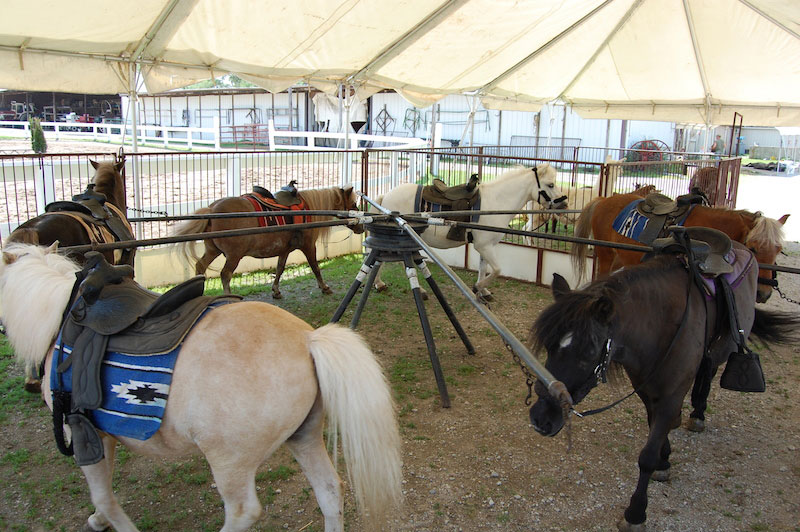 Pony Rentals Pony Rentals Forest View Farms Horseback Riding Lessons Trail Rides Horse Boarding Petting Zoo Horseback Riding Horse Riding Pony Rides Ponies Horses Birthday Parties Hayride Sleigh Ride