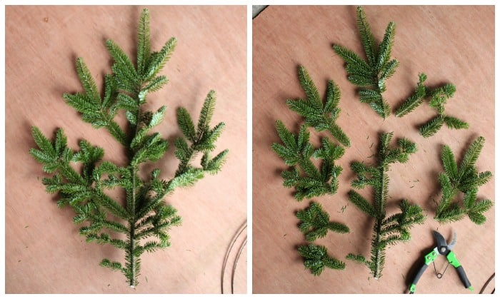How to cut brush to make a natural wreath | Christmas Wreath by popular Canada DIY blog, Fynes Designs: image of pine tree branches and branch cutters.