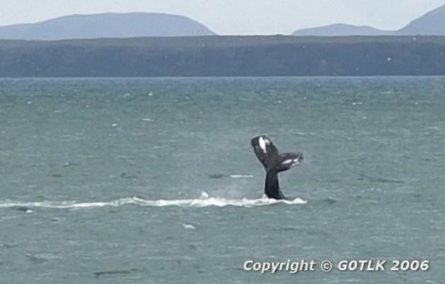 Whale tail breaching