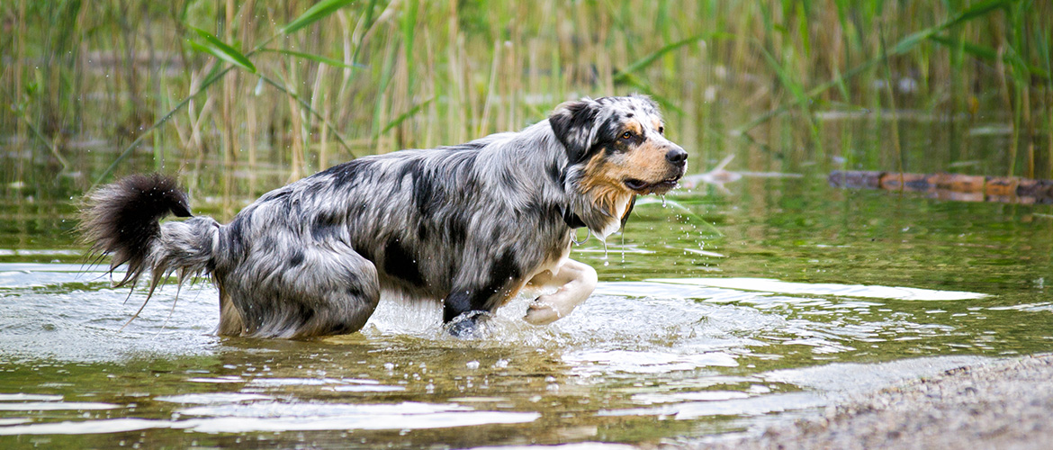 Courses To Be A Dog Trainer Uk