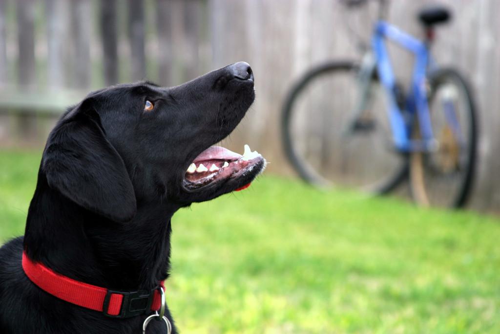 Residential dog training