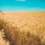 Raport OLAF: România a fraudat cele mai multe fonduri europene din Agricultură în ultimii cinci ani, peste 60 de milioane de euro/ În 2018, România și Italia au înregistrat 61% din totalul fraudelor de la nivelul UE