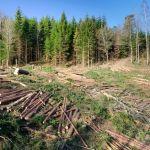 """Cinci șefi de la Romsilva Bacău au fost arestați după ce au luat un milion de euro mită de la o companie de """"întreținere"""" a pădurilor"""