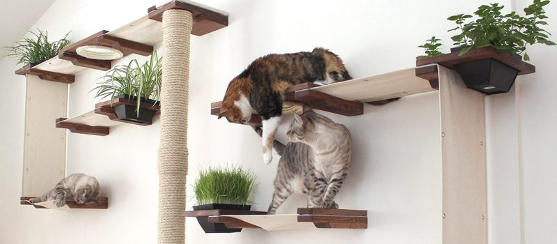 9 Awesome Cat Trees (You Can Get On Amazon)