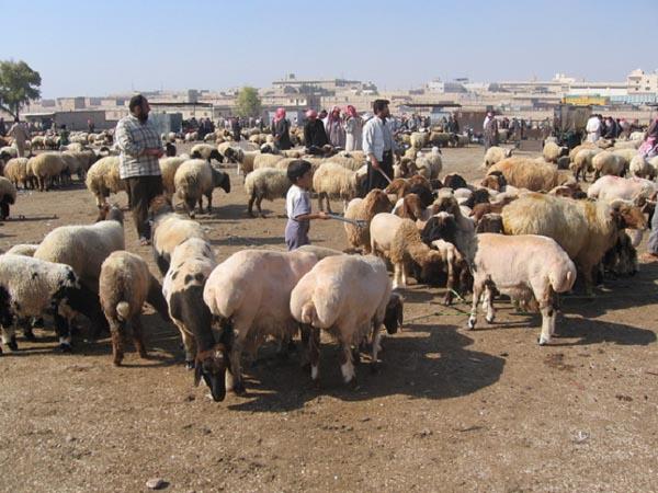Nahöstlicher Viehmarkt