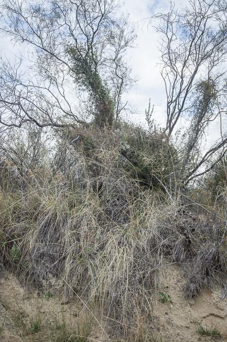 GHarhoff_Boring Brush_1606-7