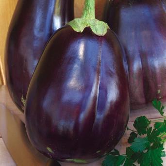 Eggplant 2