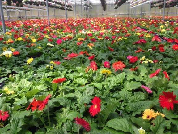 Greenhouses 5