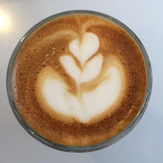 Jellyfish swims upside down @moderncoffee