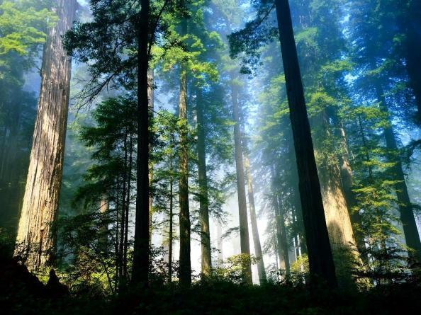 Padurea raiului