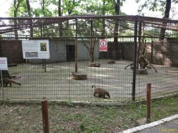 Sara la Zoo Braila Romania 10