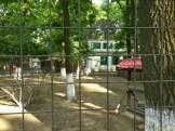 Sara la Zoo Braila Romania 15