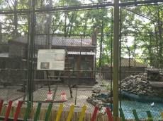 Sara la Zoo Braila Romania 3